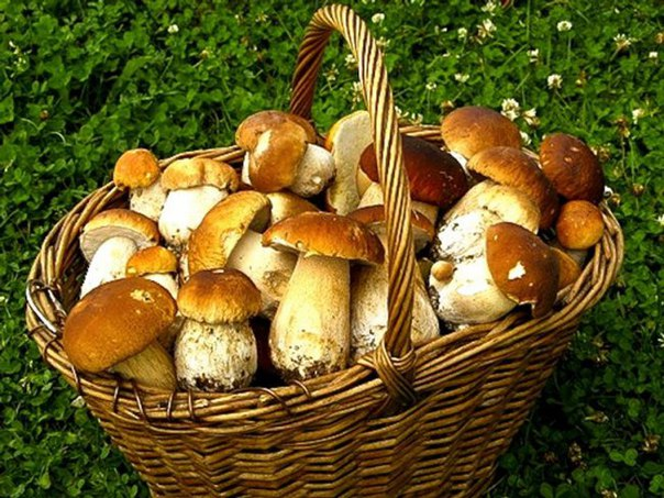 How to dry mushrooms for the winter. #грибы #рецепты of #кулинария #заготовки of #лес #назиму If was lucky you and you gathered in the wood of strong, young mushrooms, then they can be dried, and to cook from them tasty and fragrant soups, sauces, second courses in the winter. When drying mushrooms lose 90% of weight, but keep nutritious properties, are digested easier. It is possible to dry mushrooms in house conditions in the different ways: in an oven, the electrodryer, the microwave oven, or having just suspended the mushrooms strung on a thread.