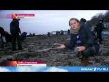 2015 Новости дня - Калининград. Шторм засыпал пляжи ЯНТАРЕМ