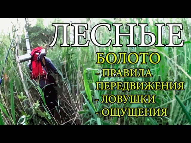 Болото | Правила передвижения | Ловушки | Ощущения | Swamp Adventures