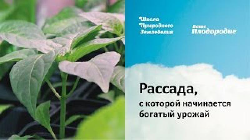 СПбРассада - купить рассаду в Санкт-Петербурге, рассада 49