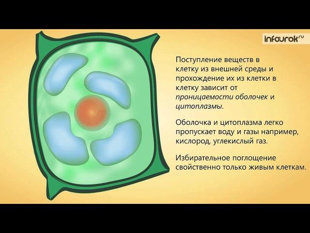 Жизнедеятельность клетки, ее деление и рост | Биология 6 класс 4 | Инфоурок