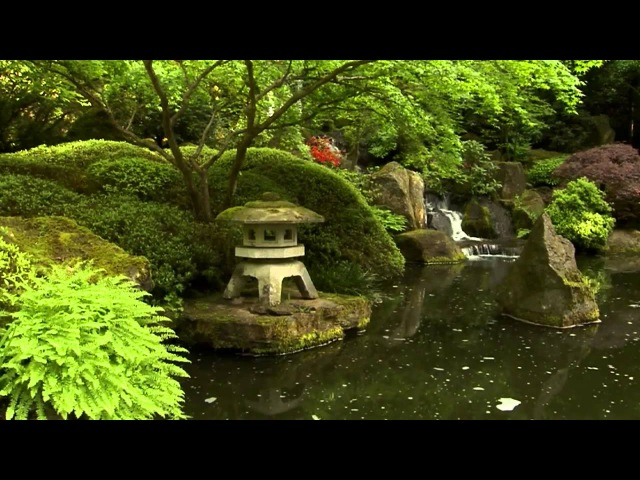 Живые пейзажи Дзен сад Living Landscapes Zen Garden
