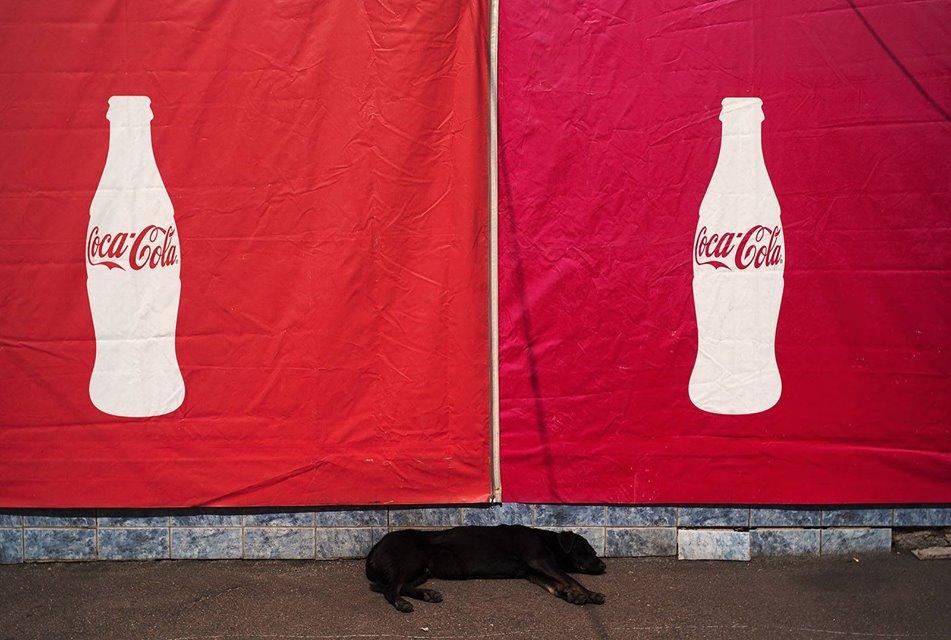 Два оттенка красного и черный пес