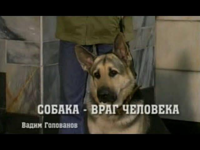 Возвращение Мухтара. 1 сезон - 22 серия. Собака - враг человека