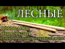 Добывание огня чагой Техника ручной огненной дрели Starting a Fire with Chaga Hand Drill