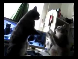 Cats playing patty cake на русском!!! коты играют в ладушки.