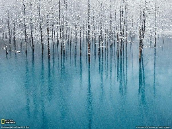 "Blue Pond (""Голубой пруд""), Хоккайдо, Япония."
