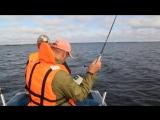 Поездка на рыбалку на Онежское озеро.Великая Губа. 2015г. 100