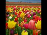 цветы прославляют Творца Иегову