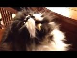 Кот ест мороженое