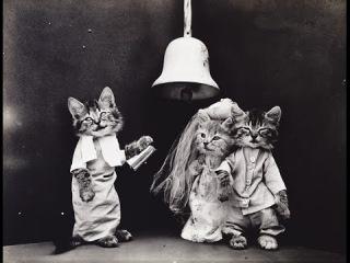 Коты и Собаки  Черно-белое фото из прошлого века