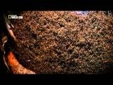 Животный разум в колонии муравьёв