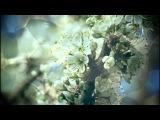 Духовная поэзия Зинаиды Миркиной - 26. Знаешь, что такое дерево Стихи для Души