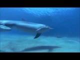 Дельфины Дмитрий Маликов &amp ДиДюЛя