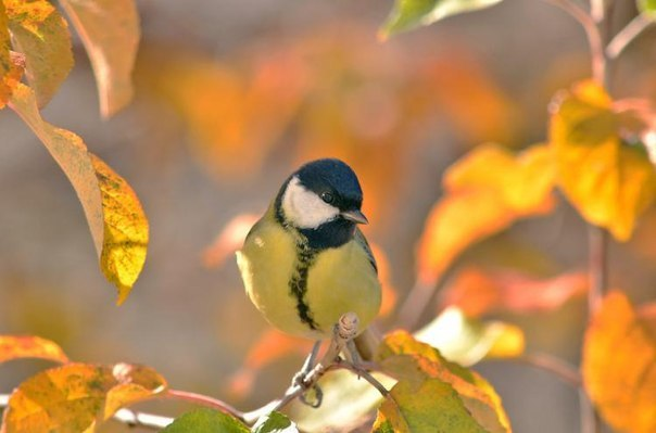 Autumn time ... - Pagina 2 SDZWhUHm5ro