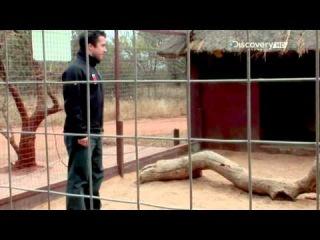 Беар Гриллс Кадры спасения Животные