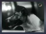 Mecano - Laika (Tribute)