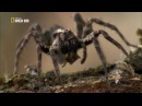 Супер паук / Super Spider (2012)