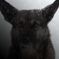 Аватар Хмурыя Пёса