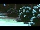Ансамбль Хвиля - Чорні очка як терен
