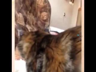 Dulcinea Katrin's Tail's