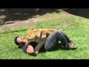 Львица соскучилась по человеку, который её вырастил