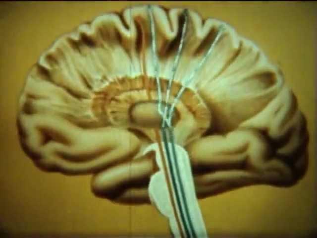НаучФильм. Проводящие пути спинного и головного мозга.