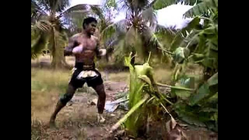 Обезбашенные тренировки Буакава: 30 банановых деревьев вхлам
