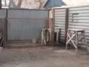Не РЕАЛЬНО ! Собака танцует под Modern Talking! Видео приколы смотреть самое смешное ви ...