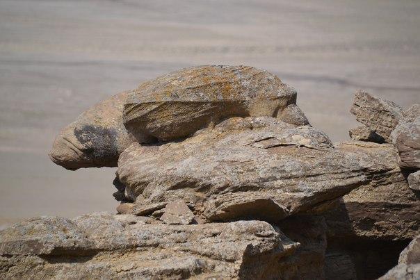 Каменная скульптура на Западном Чинке Устюрта