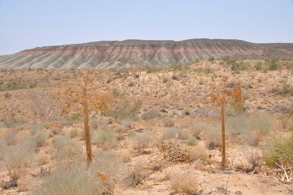 Песчанный массив на фоне Чинка Устюрта