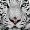 """Интернет магазин """"Белый Тигр"""""""