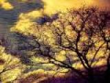 Pantha Du Prince - Bohemian Forest (Original Mix)