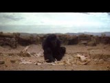 2001 A Space Odyssey - The Dawn of Man