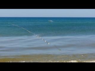 дельфины на нашем пляже, где воды по пояс