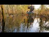 онлайн рыбалка в камышах 1 !!!