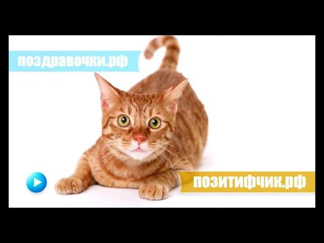 Мяукание кошки :)) Включите громче и увидите реакцию
