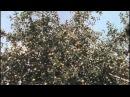 Возвращение Будулая (Серия 04) (фильм)