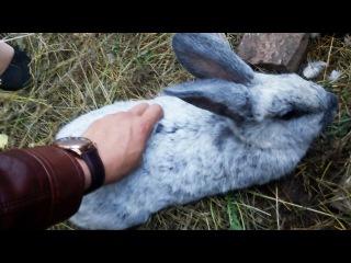 Кролиководы России, Курск: кролики породы НЗК, Калифорнийцы, Ризен белый великан, Фландр, Серебро.
