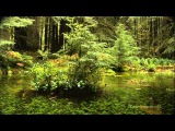 Armin van Buuren and Jan Vayne - Serenity (Orchestral Version)