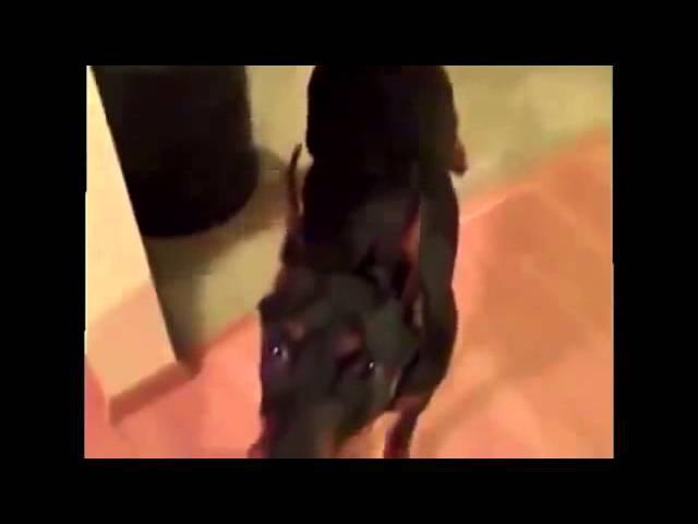 Собака собирается на дачу РЖАКА озвучка супер