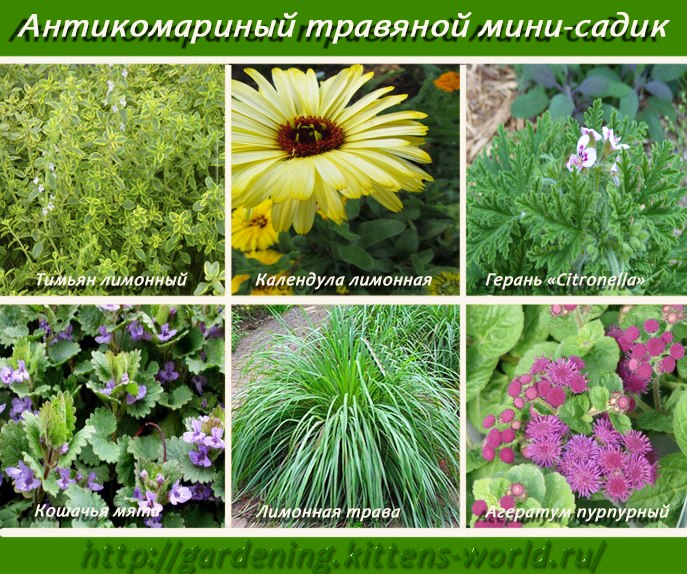 Антикомариный травяной мини-садик