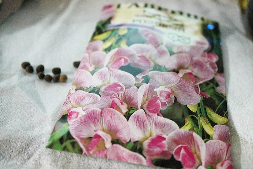 Февраль – начинаем сажать цветы и перцы