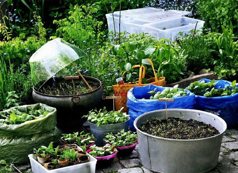 Выбираем емкости для посадки семян на рассаду. Видео: мастер-класс - стаканчики из газеты