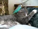 Кот и попугай, дружба Cat and parrot Смешно,прикольно,ржачно,забавно,весело,до слез