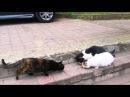 Lustige Katzen Videos 2015