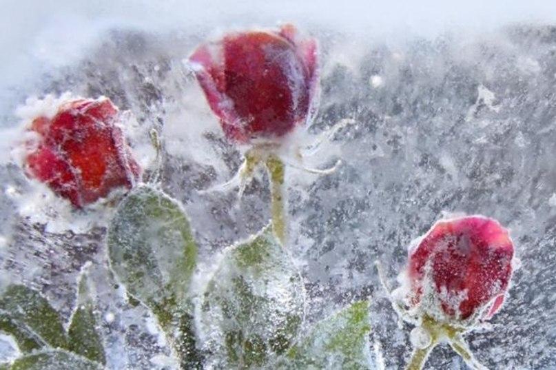 Цветы растущие зимой картинки