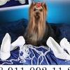 ВашСтиль Туфли Шубки Сапожки для невест СПб