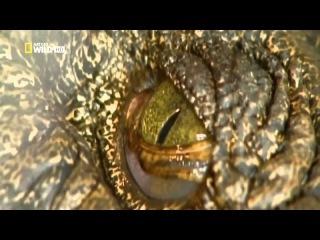 Крокодилы древние хищники Док фильм.