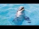 Дельфин приплыл на пляж - Dolphin swam to the beach